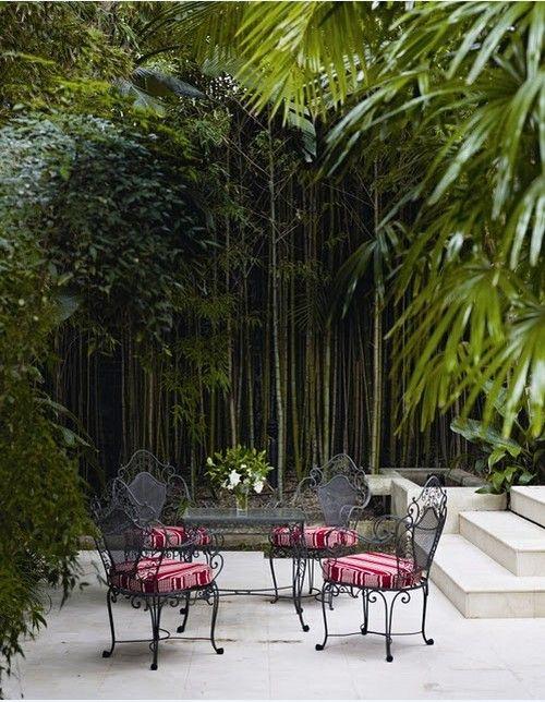 bambus garten zu hause wacshen lassen wald im hause ...