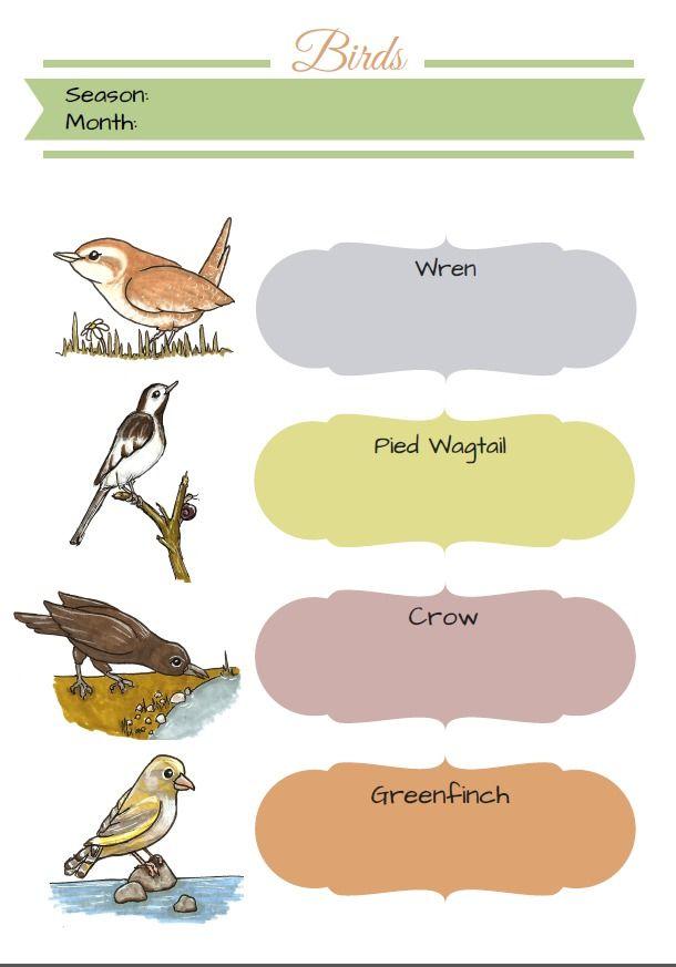 Bird Watching & Identification (FREE PRINTABLE | Bird ...