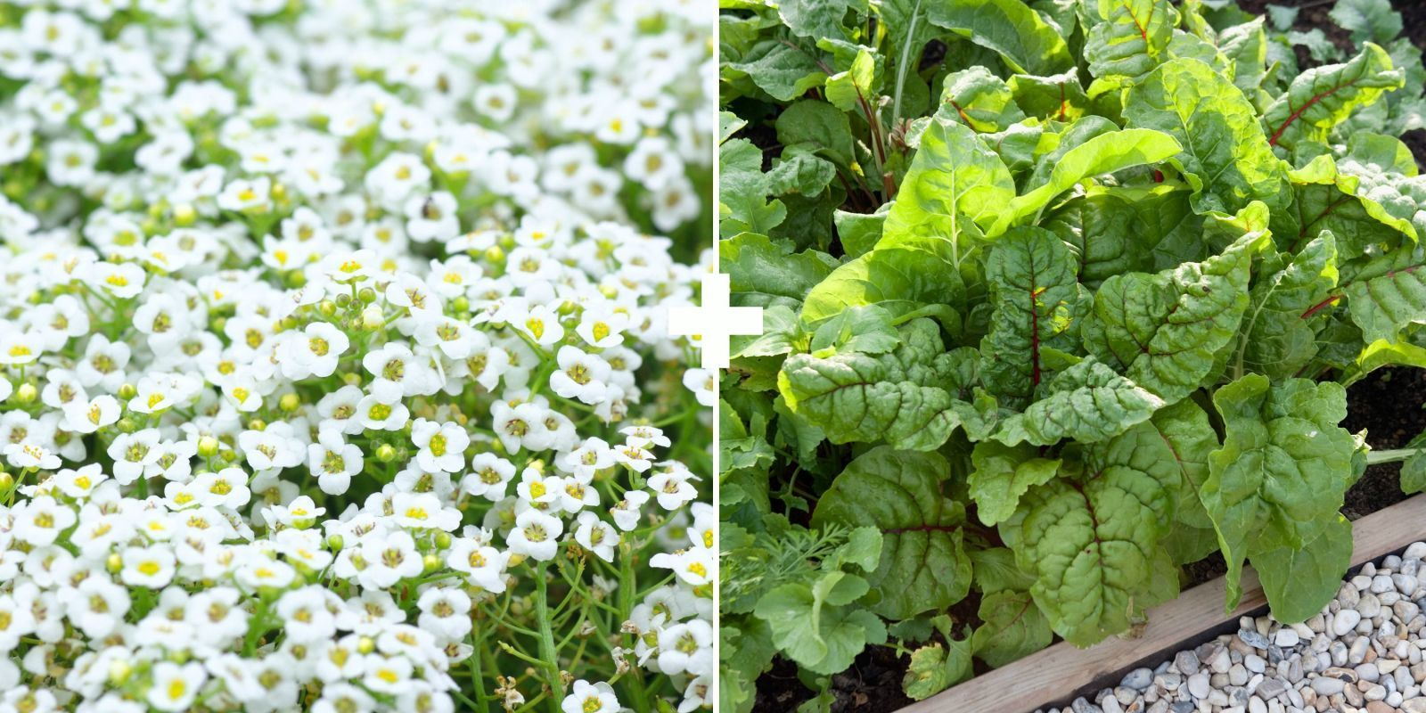 29 Plants You Should Always Grow Side By Side Companion 400 x 300