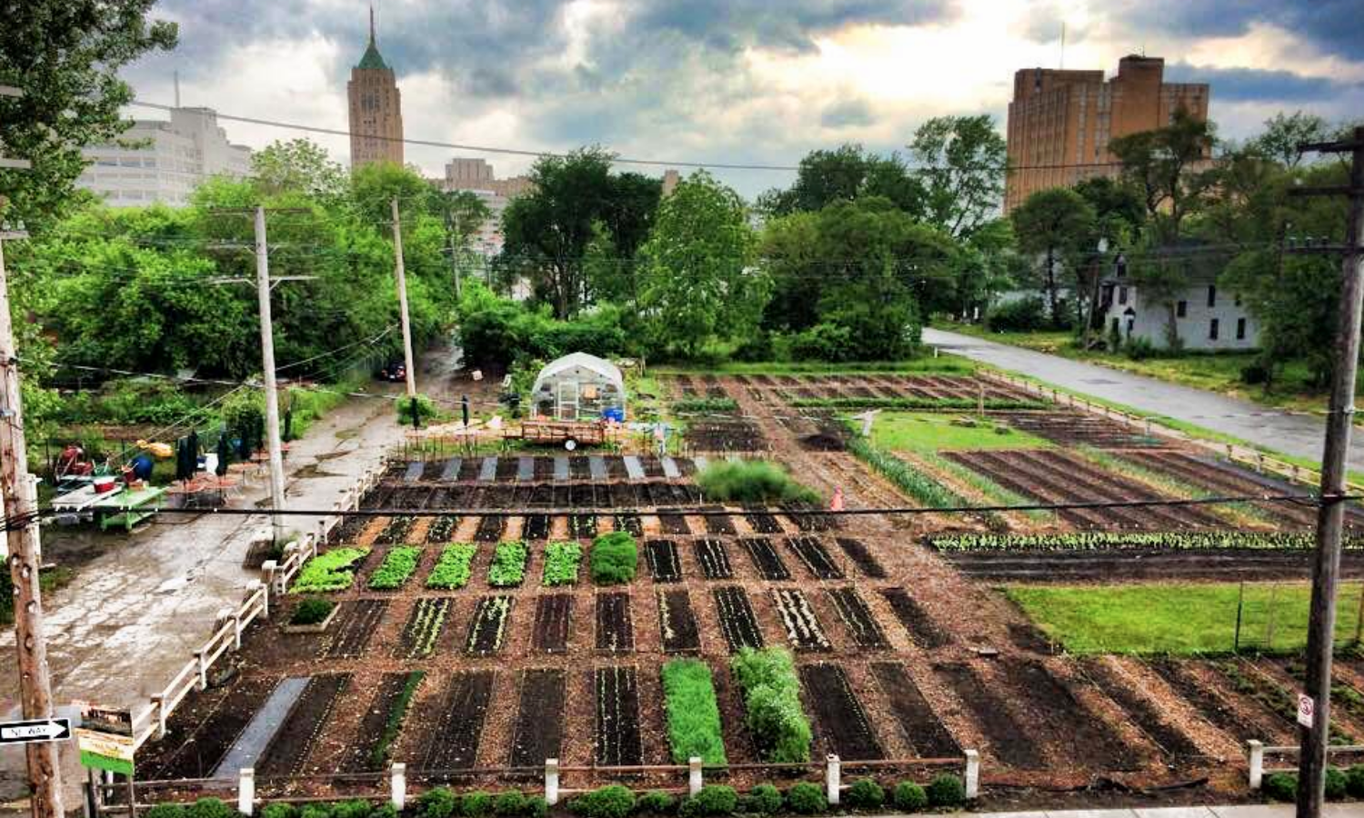 The Food And Agriculture Organization Of The United Nations Fao Defines Urban Agriculture As The Growing Of Plan Urban Agriculture Urban Farming Agriculture