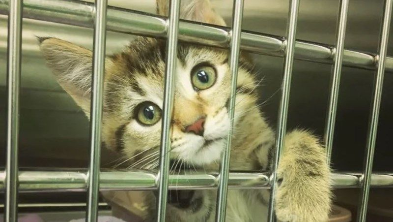 Over 50 Cats Adopted In Less Than 24 Hours During Cat Adopt A Thon