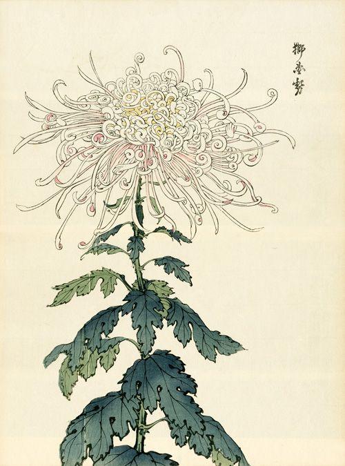Keika Chrysanthemum Wood Block Prints Japanese Woodblock Printing Japanese Art Flower Art