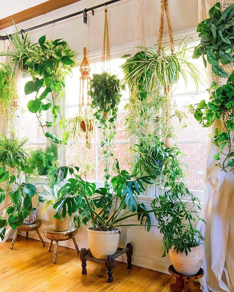 Place plants in windowsills or hang them from curtain rods - How to hang plants in front of windows ...