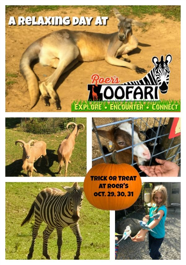 Formerly the Reston Zoo, the new #RoersZoofari is an animal sanctuary and safari experience right in Northern Virginia!