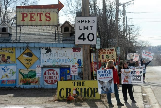 Puppymill opponents protest Loveland store again Puppy