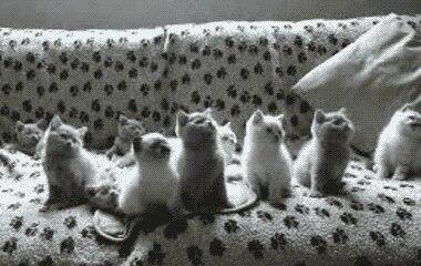 Adorable Kittens Cutest Funny Cat Videos Cute Kitten Gif