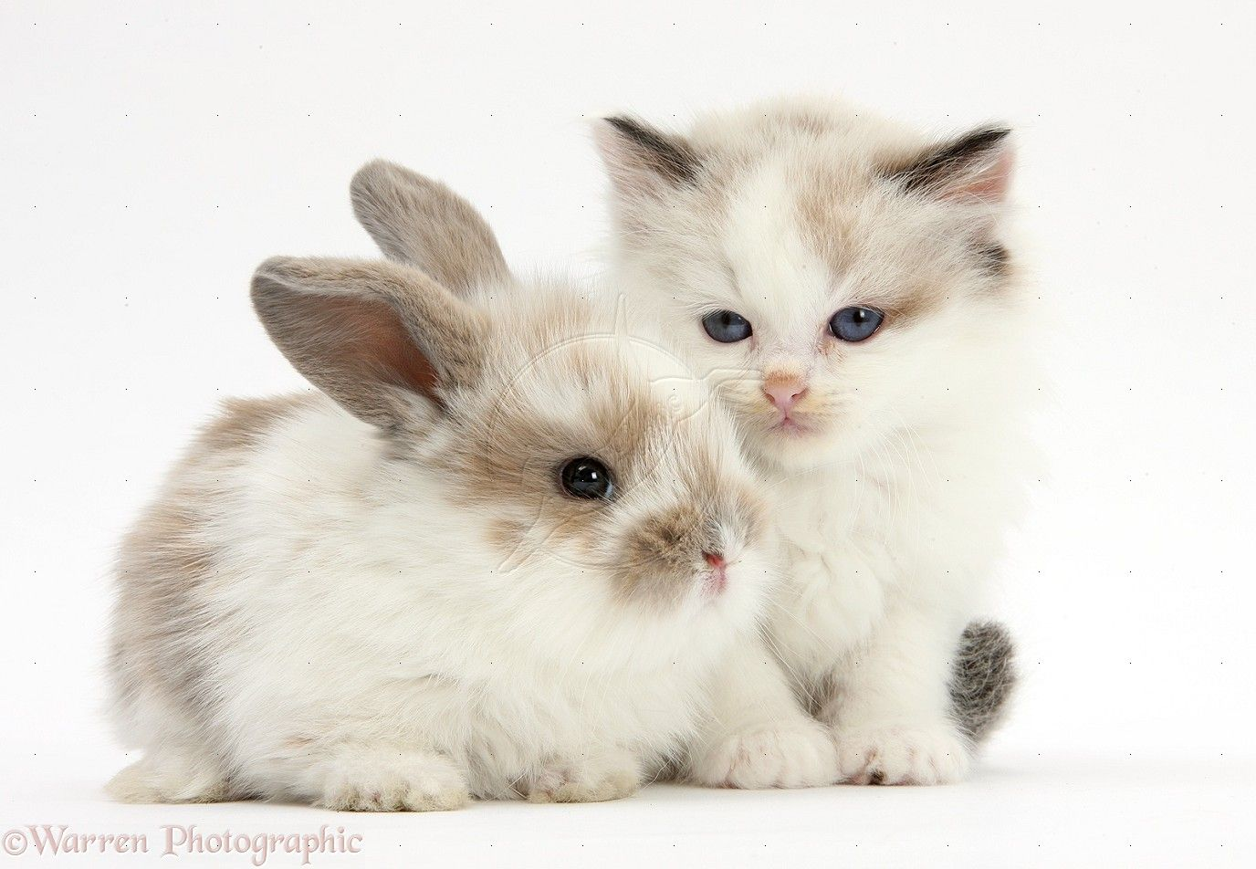 cute rabbit and kitten - Google Search | Cute Animals ...