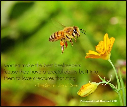 Secret Life Of Bees Quotes Unique The Secret Life Of Bees By Sue MonkKidd Quotes Pinterest