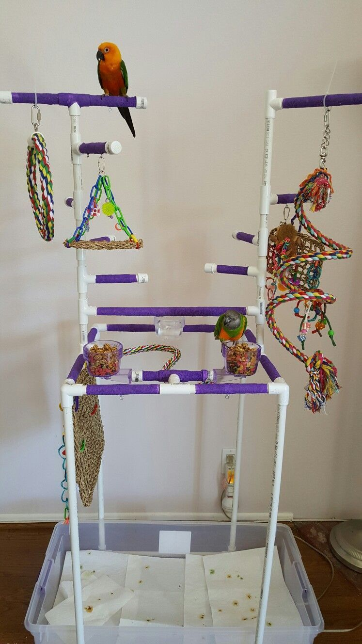 Parrot pvc play gym buildaviary parrotpet parrot care