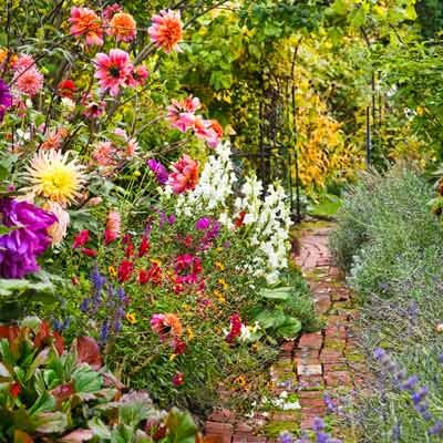 Beautiful Cottage Garden - brick walkway surrounded by blooming flowers with nearby garden gate