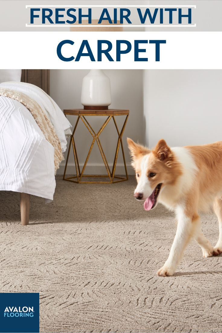 Carpet Can Improve Air Quality Air quality, Indoor air