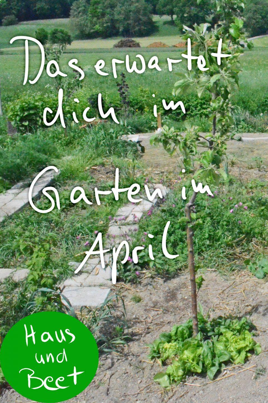 Was gibt es im Garten im April zu tun? #plantingsucculents