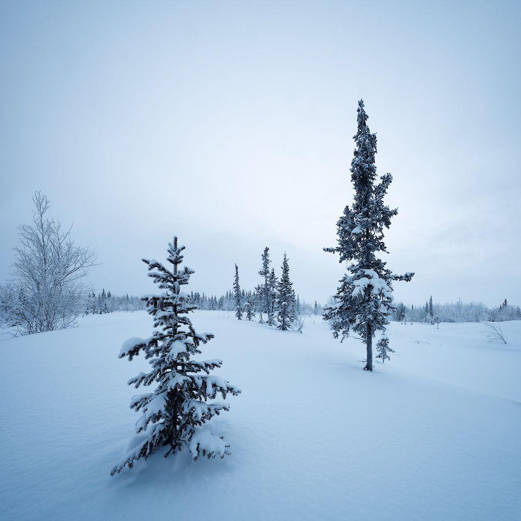Winter feer   Winter, Russia, Outdoor