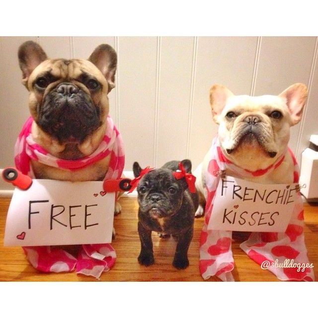 Free French Bulldog Kisses For Valentines Day With Images