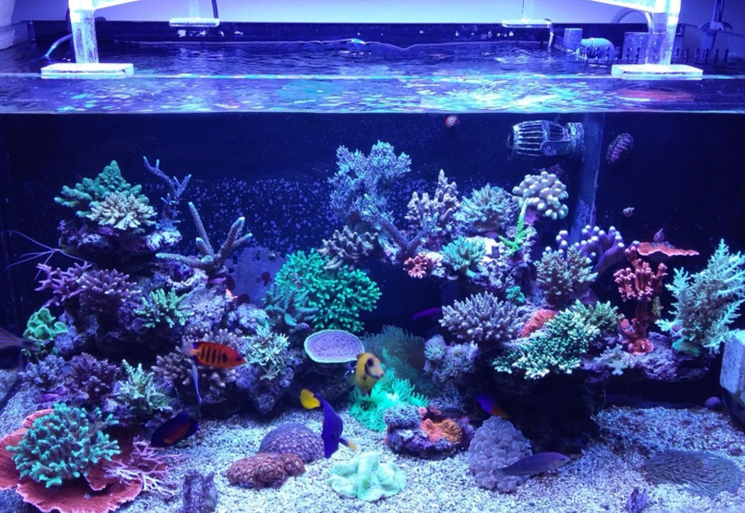 Mr Kangs Reef Aquarium Before And After Saltwater Aquariums