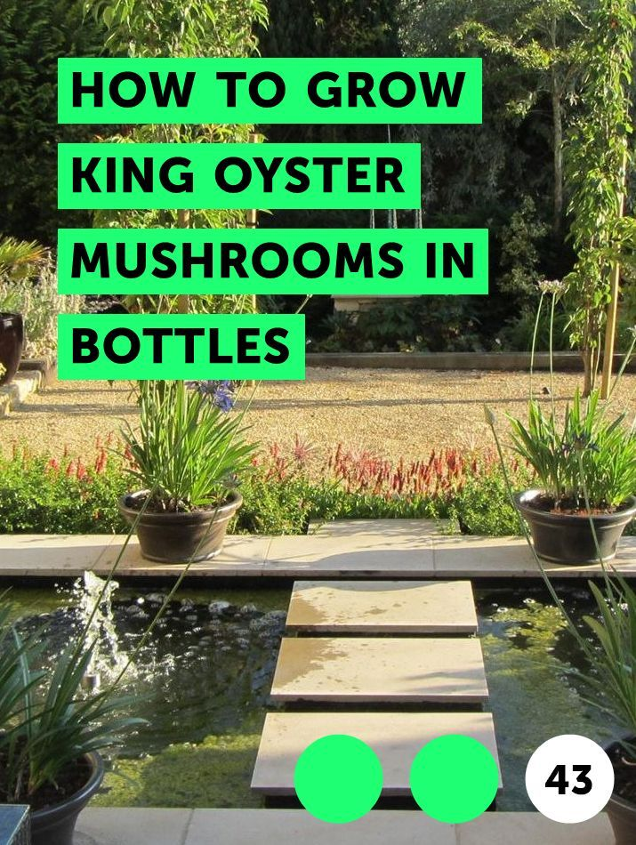How to Grow King Oyster Mushrooms in Bottles Growing