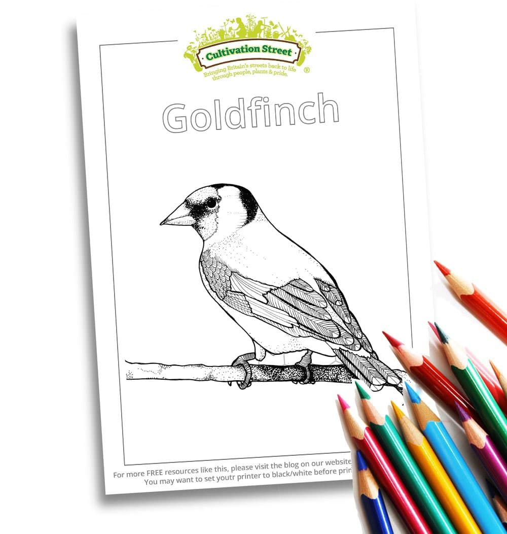 Goldfinch Colouring Color Activities Activity Sheets Activities