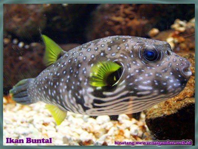 Nama Binatang Dari Huruf B Nama Gambar Binatang Akuarium Air Asin Binatang Ikan Akuarium