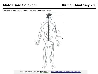 Inside Out Anatomy The Nervous System Worksheet Education Com Human Body Systems Nervous System Life Science Middle School