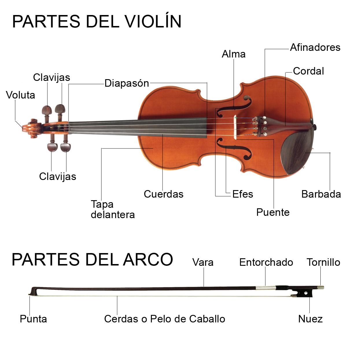 Partes Del Violin Y Del Arco Violines Acordes Musicales Violin Dibujos