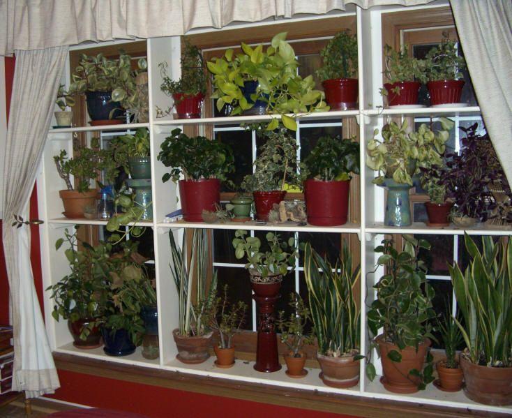 Window Plant Shelves Greenhouse Indoor Garden