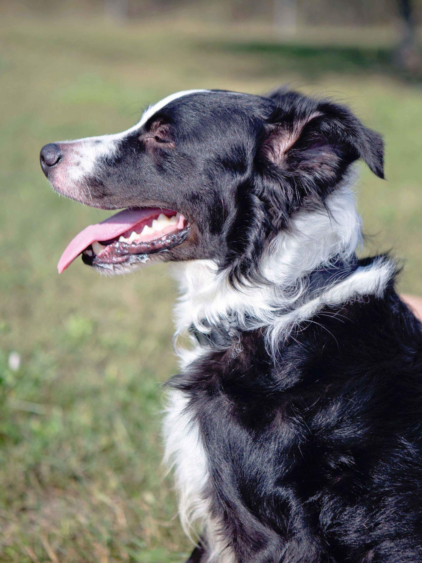 Adopt Loki On Doggies Dogs Labrador Retriever Mix Loki