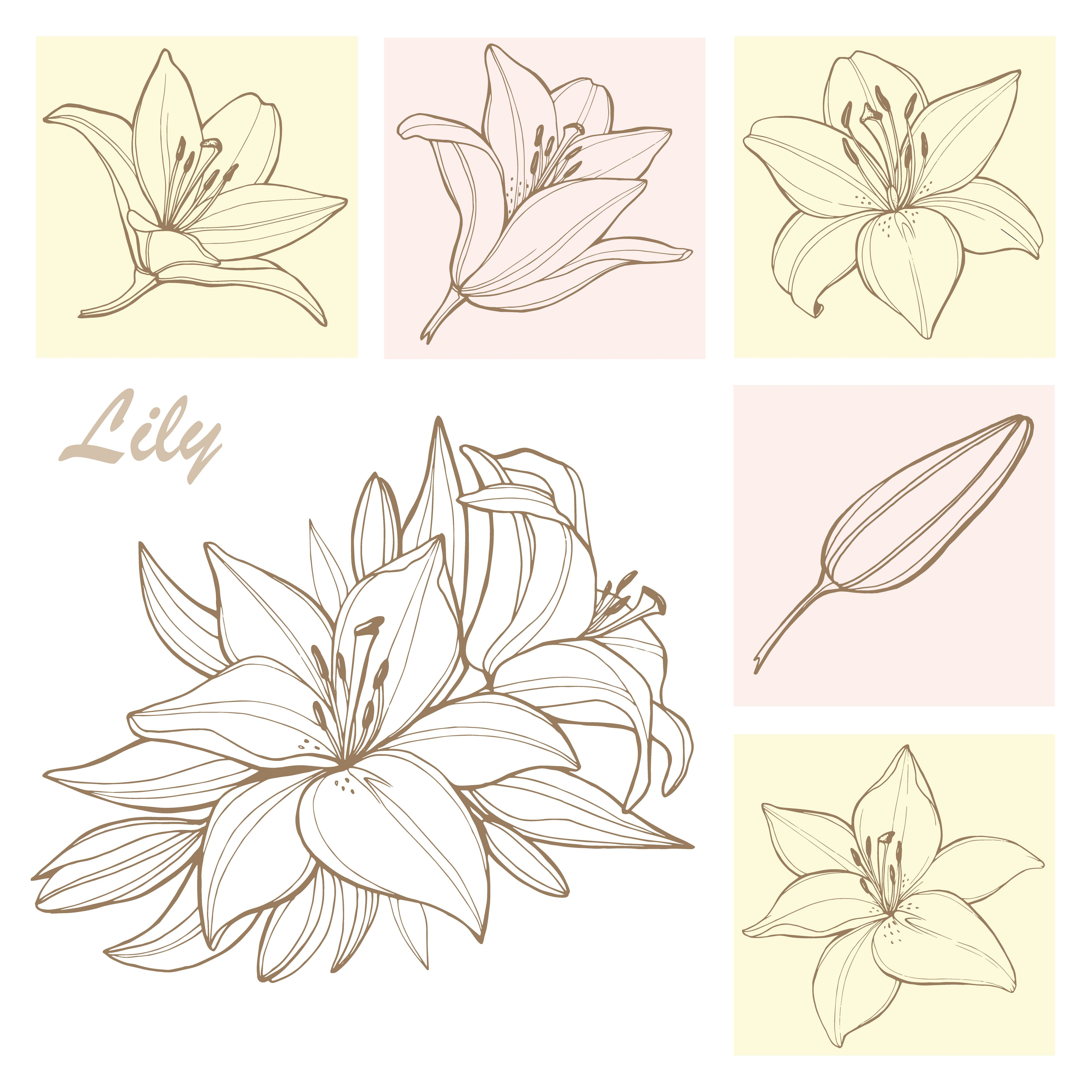 Lily flowers. Line elements. Vector illustration в 2020 г