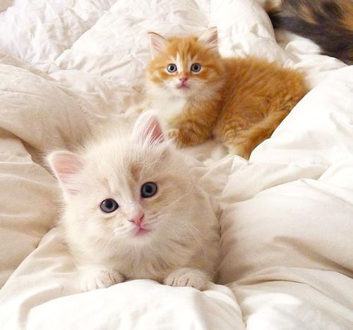Via Imgfave For Iphone Luna Mi Angel Cats Kittens Pretty Cats