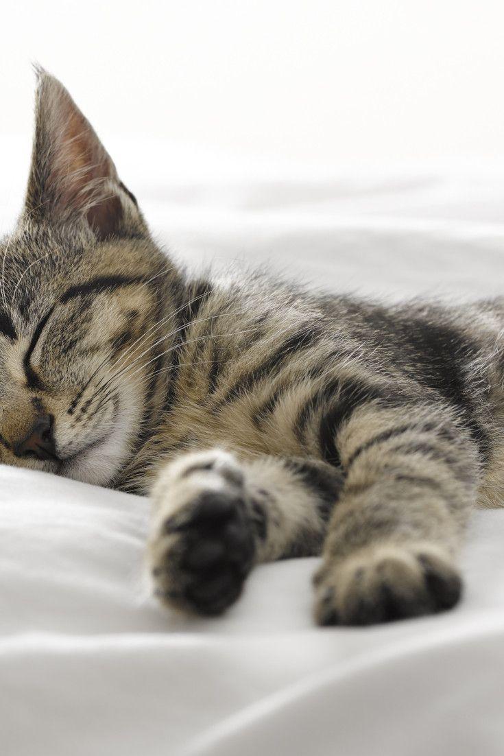 15 Adorable Sleeping Animals To Inspire Your Perfect S Night Sleep Sleeping Kitten Cat Sleeping Sleeping Animals