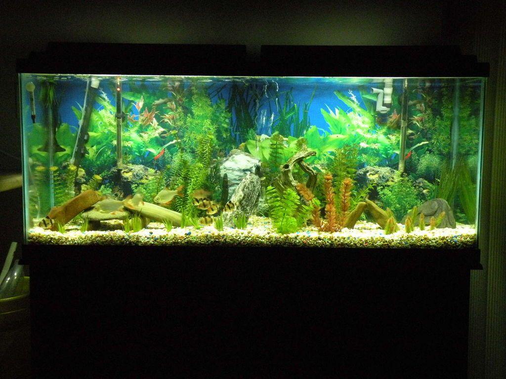 1b764e55d86d3b LED Aquarium Moonlights | Fish Tanks | Aquarium, 10 gallon fish tank ...