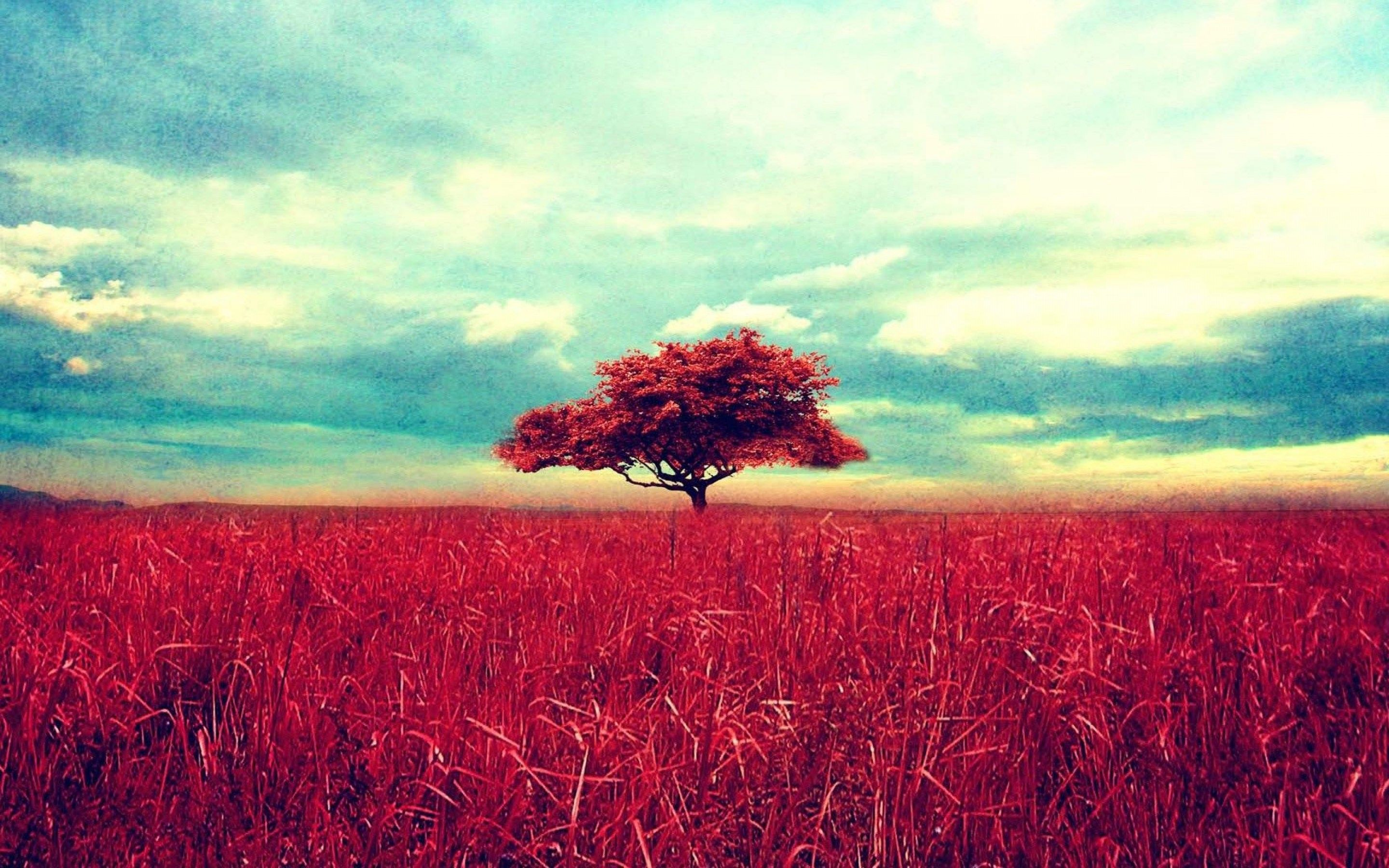 retro red tree and a beautiful wheat field beautiful nature