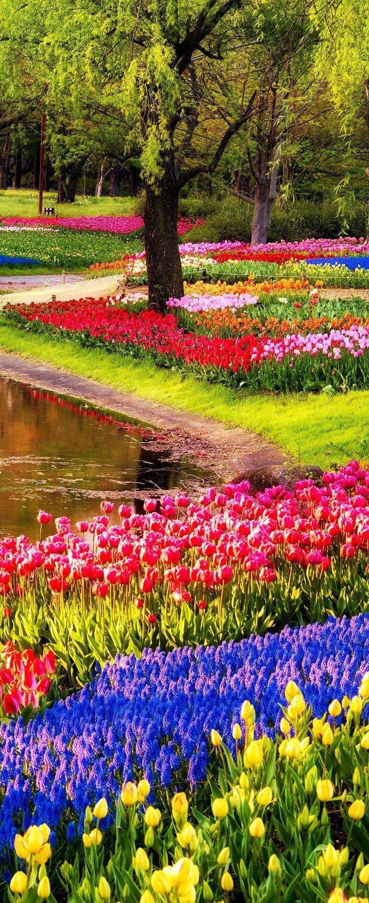 keukenhof gardens - amsterdam | netherlands #ad | nature | tulips