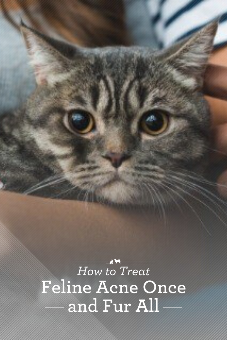 How To Treat Feline Acne Once And Fur All Feline Acne Cat Skin Cat Parenting