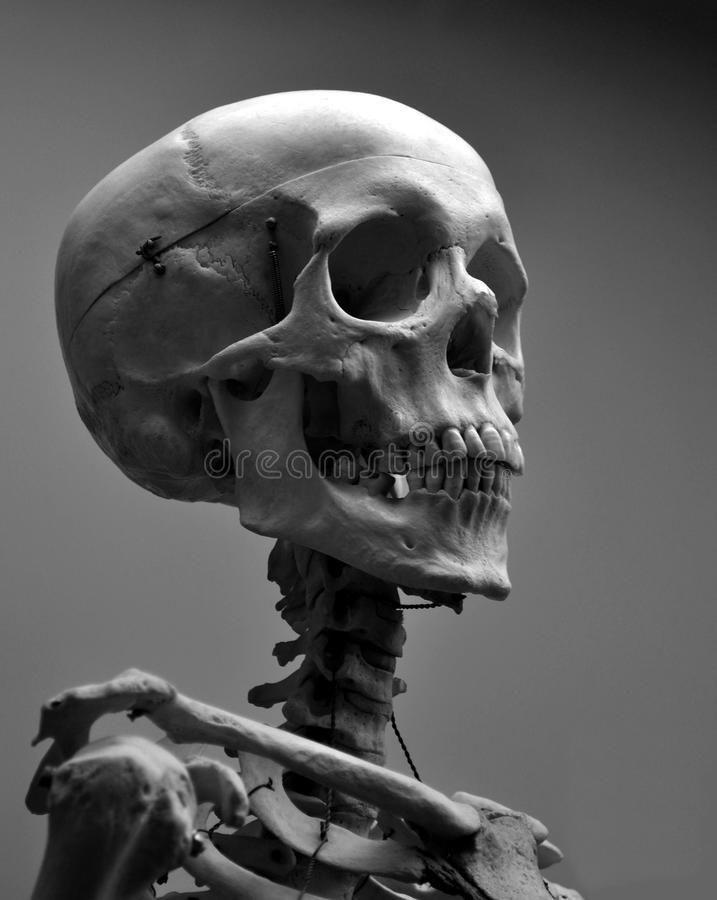 Museum Quality Human Skull Skeleton. This is a museum quality human skull skelet , #spon, #Skull, #Skeleton, #museum, #Museum, #Quality #ad