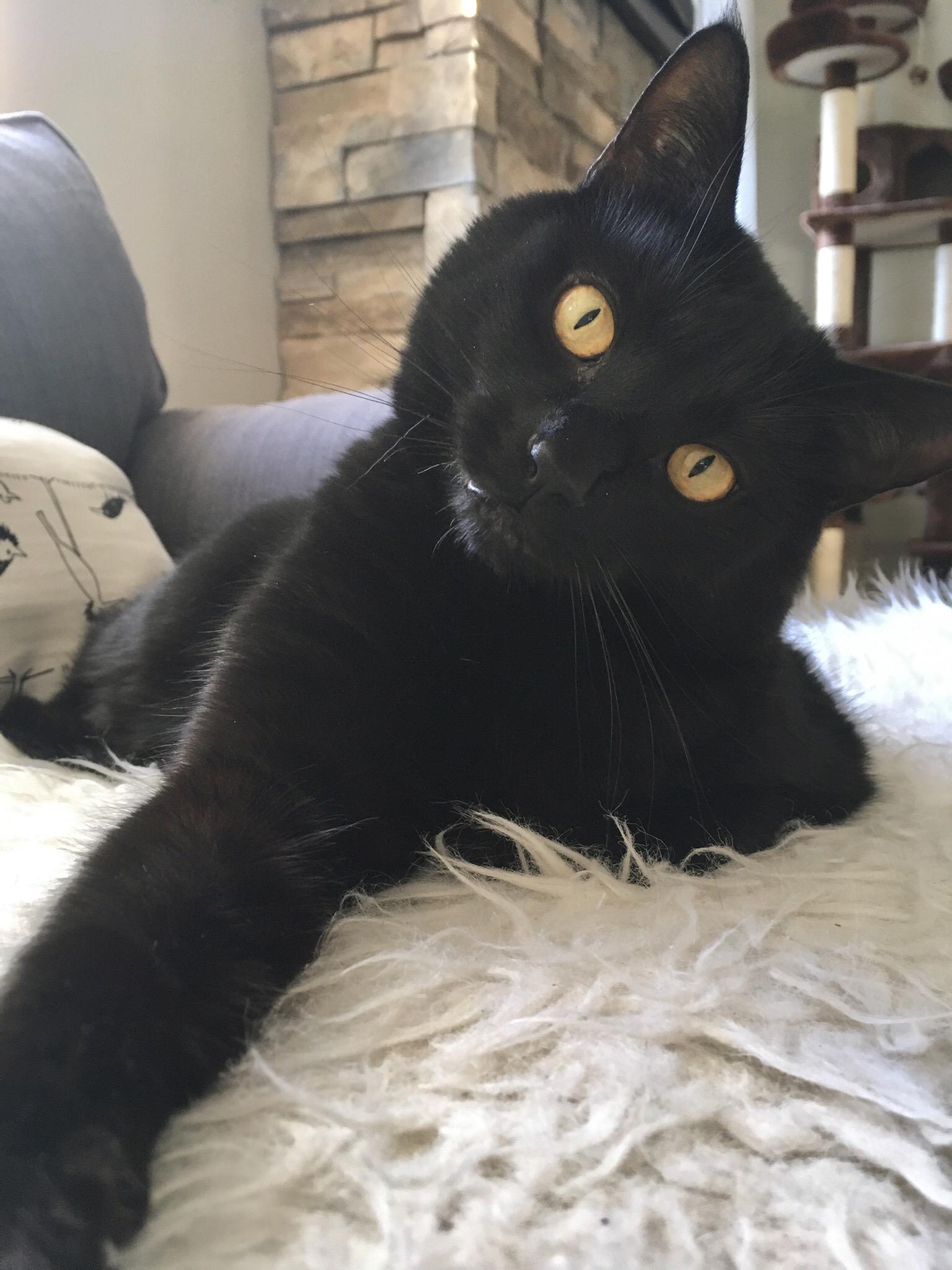 Black Cats Are Just So Beautiful Cats Black Cat Beautiful Cats