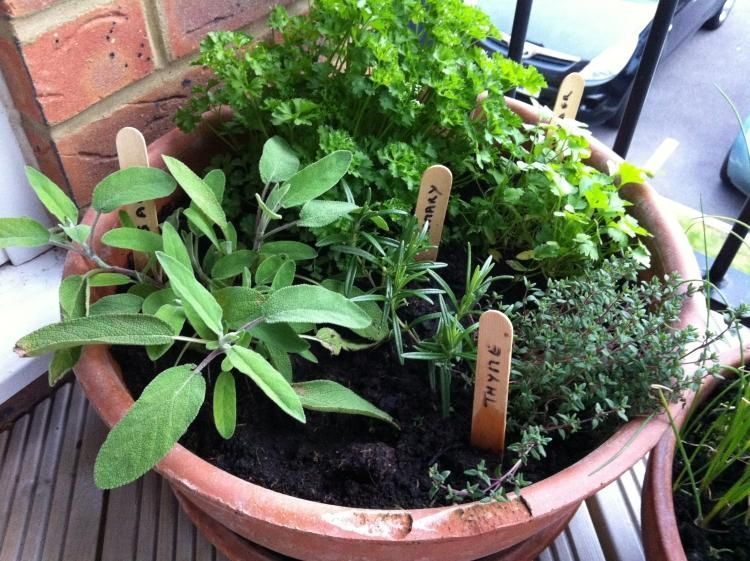 plantes aromatiques au balcon comment cultiver les herbes - Planter Des Herbes Aromatiques En Jardiniere