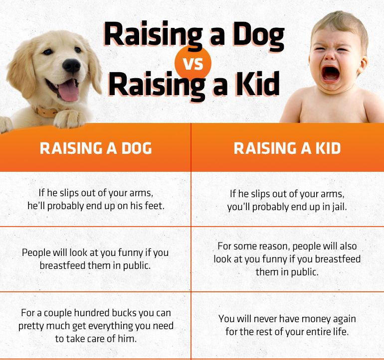 Chart Raising A Dog Vs Raising A Kid Cheap Pets Funny Animal Memes Kid Memes