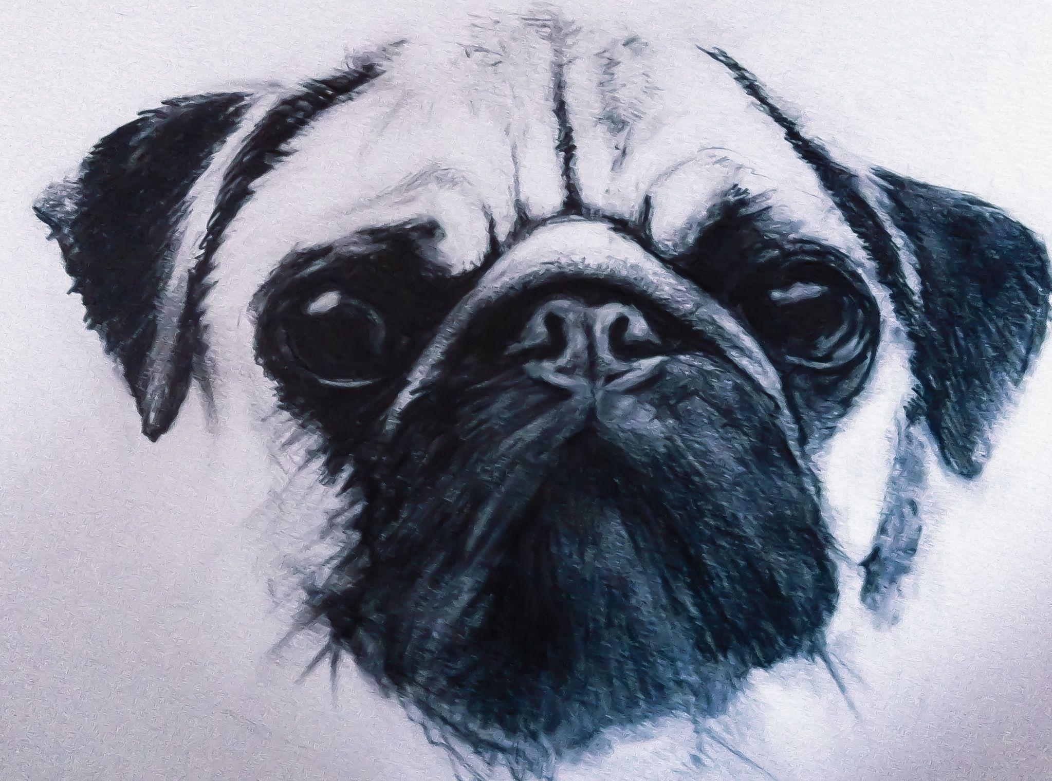 Pug Sketch Drawings Easy Pug Tattoo Pug Art Pugs