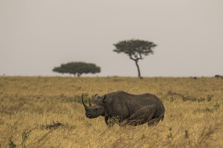 rare encounter on our safari in the Serengeti Serengeti