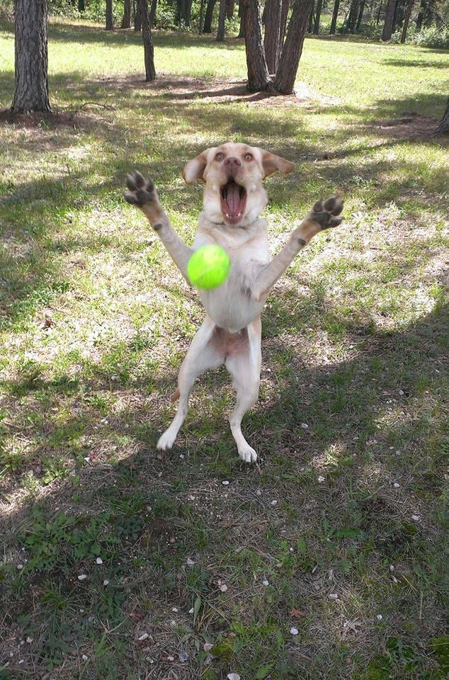 Toss It With Images Cute Animals Funny Animals Dog Love
