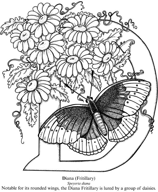 Welcome To Dover Publications Coloring Book Butterfly Designs