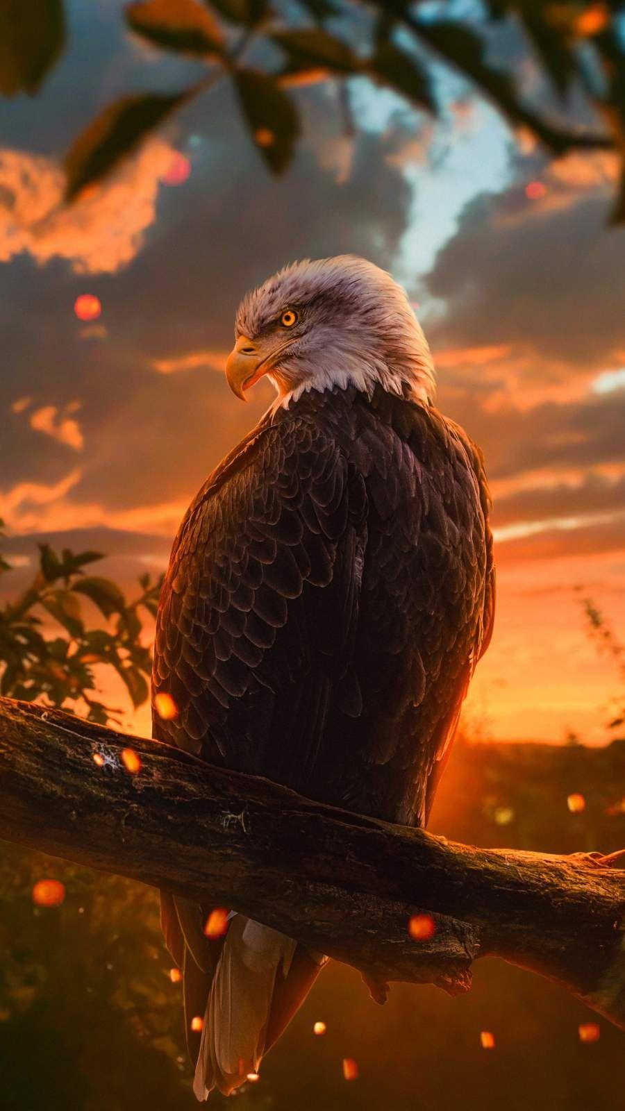 Golden Eagle Iphone Wallpaper Eagle Wallpaper Bald Eagle Wild Animal Wallpaper