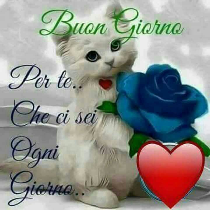 Buongiorno Auguri Gatos Frases E Flores
