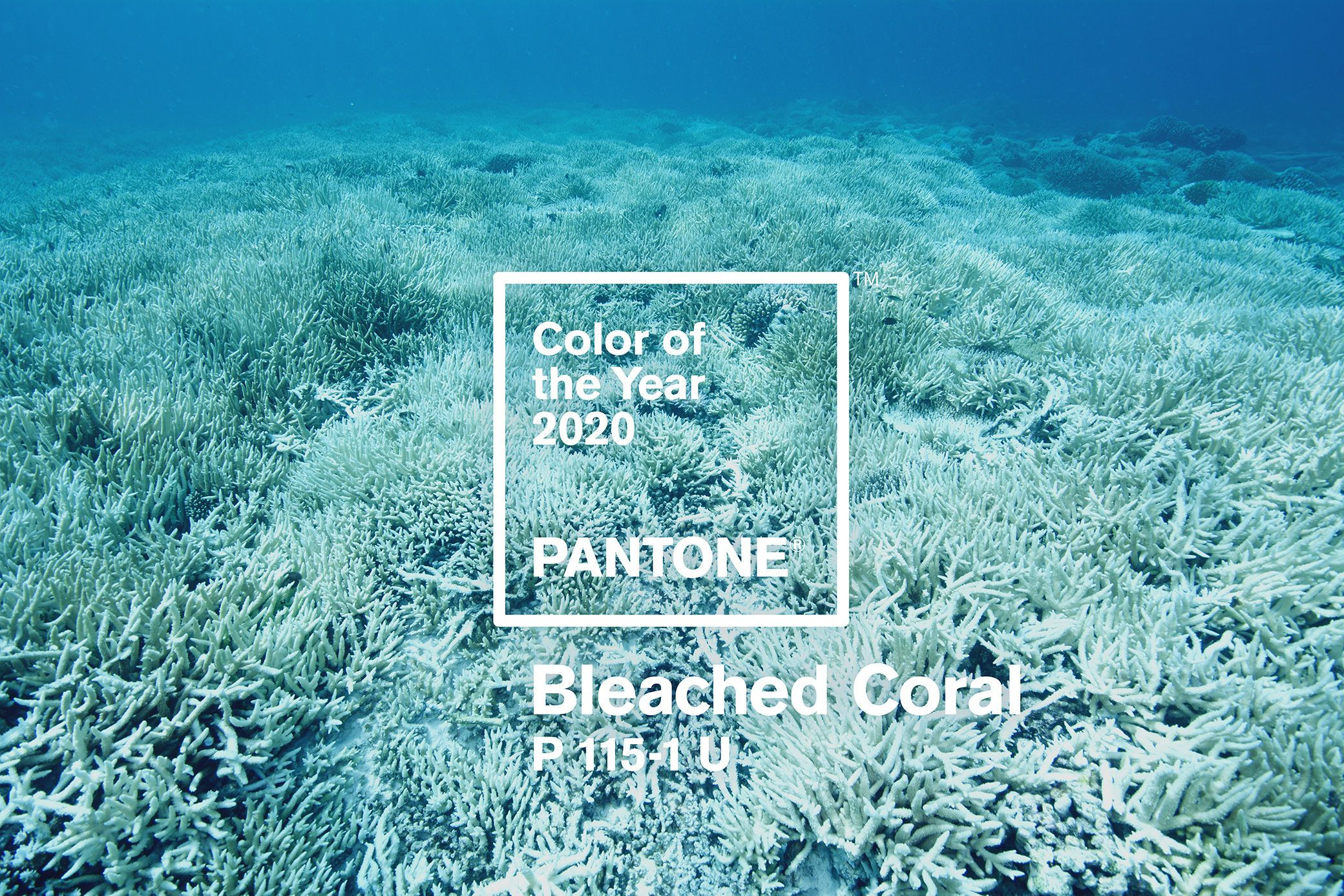 Pantone Color Of The Year 2020 Bleached Coral Making A