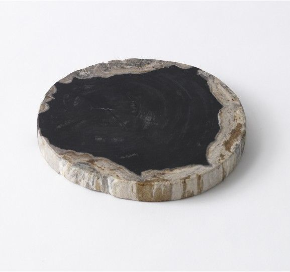 Petrified Wood Tray Slices Of Fossilized Trees Rock Hard