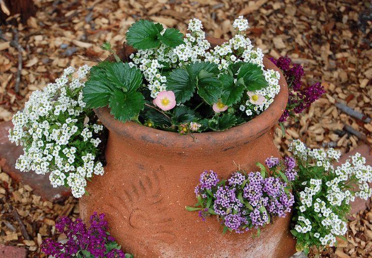 Strawberry Pots Flowers On Pinterest Gardens Water Bottle