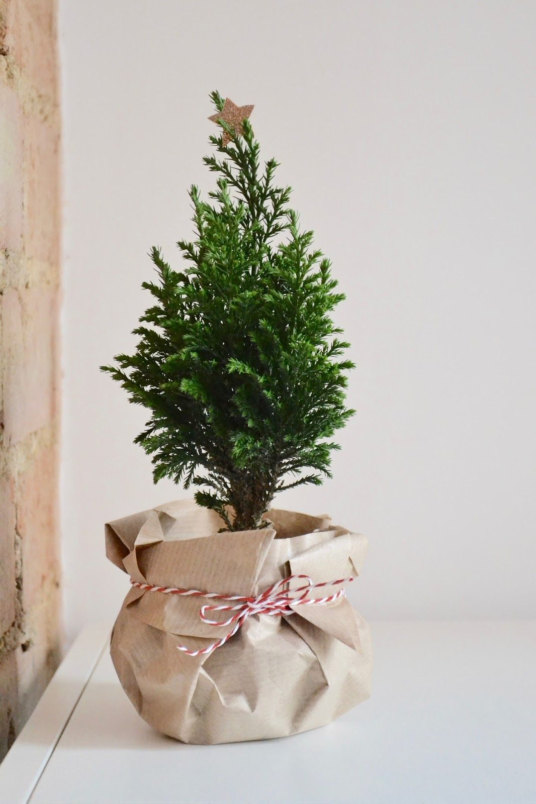 Diy christmas with images plant gifts christmas