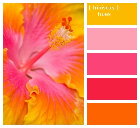 Colour Palette Inspired From Hibiscus Flower Loved By Ganesha Pink Color Schemes Yellow Hibiscus Lilac Color