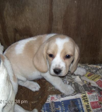 Learn additional information on Beagles. Take a look at