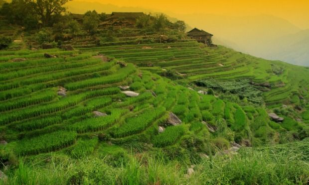 Truly gob smacking scenery: Get out of the main tourist areas, and see Bali's world heritage listed rice terraces, watch a farmer herding his flock of ducks, see a woman perched side ...